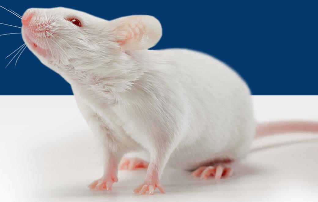 2010年通过上海市实验动物管理办公室组织专家的验收并启动服务,取得